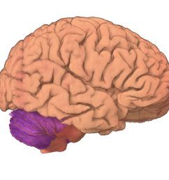 brain 2 [ 1200 x 679 Pixel ]