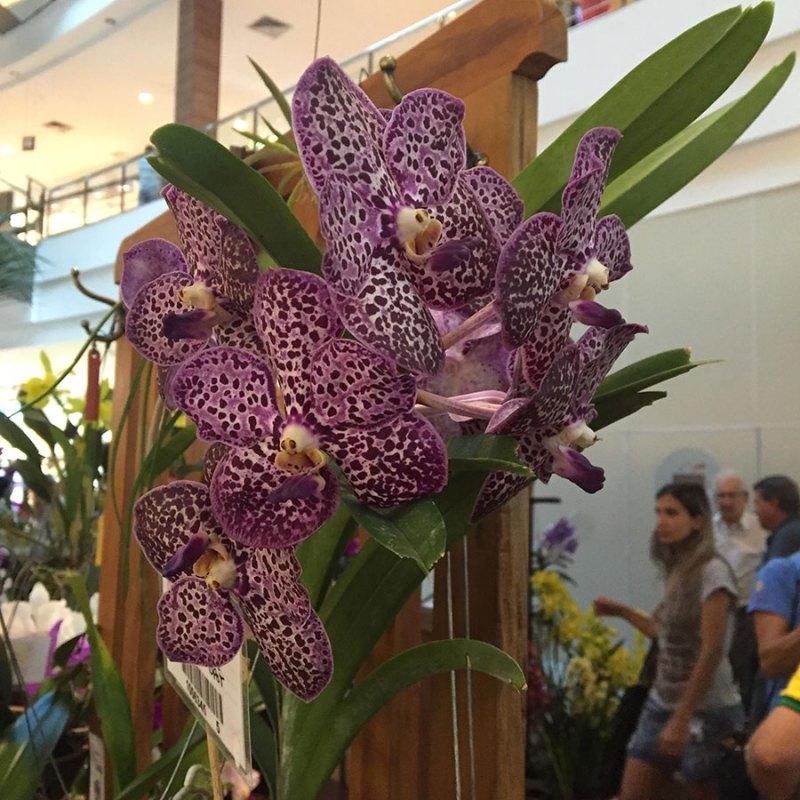 Shopping Santa Úrsula promove 5º edição do Festival de Orquídeas