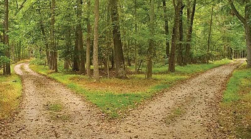 O bosque da vida