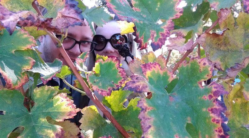 Visita a vinícola Guaspari