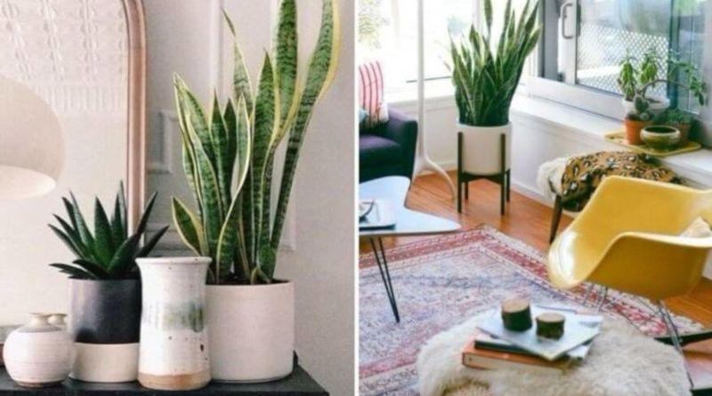 Feng Shui: harmoniza sua casa e equilibra sua energia
