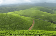 Benue and the Agricultural Moment of Truth in the North