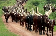 Make a Choice on Herdsmen Crisis - Says Meg Otanwa, Nollywood Actress to President Buhari