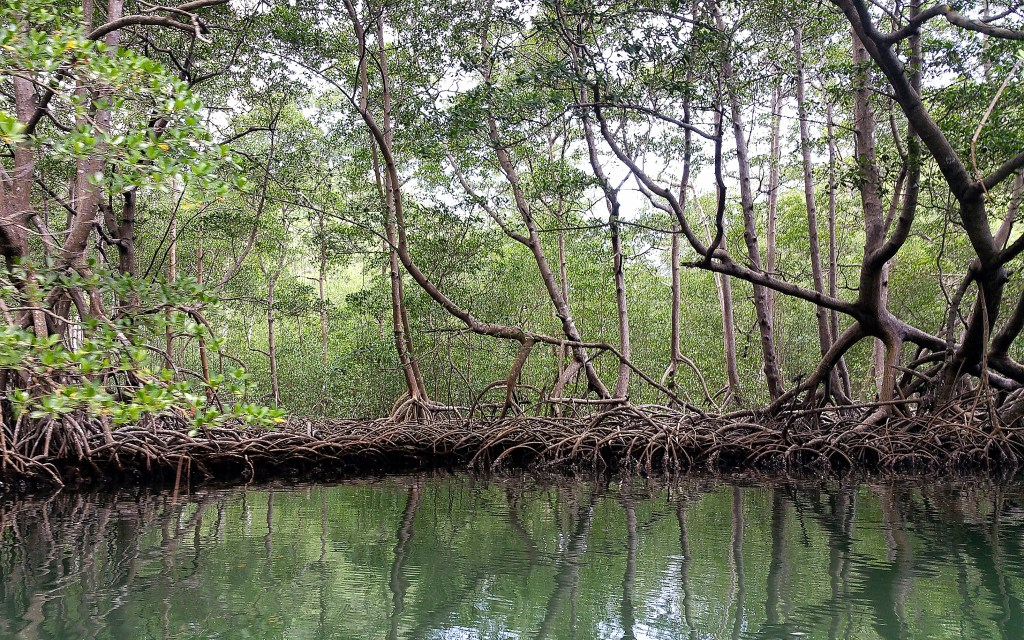 Mangroves reflected in water in Los Haitises National Park