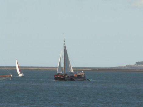 Swale match 2013 36 Dutch sailing barge