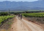 Mountain bikers in action during a previous year's Java MTB Challenge.