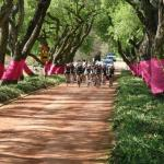 Tour of Good Hope goes all pink