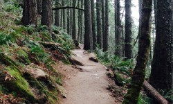 A trail wanders through Spencer Butte Park