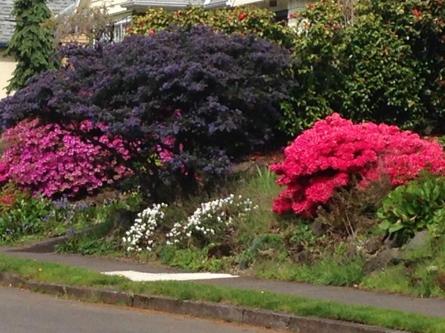 Elaborate flowering gardens