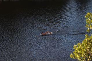 Murray Lake – Martin schwimmt