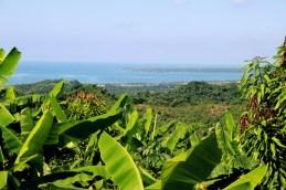 Bananen und Mango Plantagen an der Pazifikküste