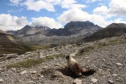 Auch Murmeltiere genießen die Aussicht