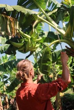 Mit der Machete zum Bananen pflücken