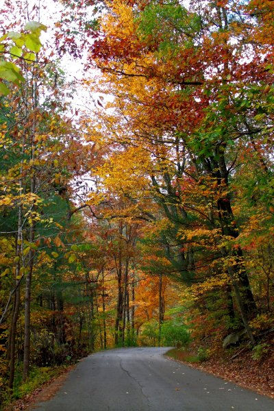 Hello, Beautiful Fall