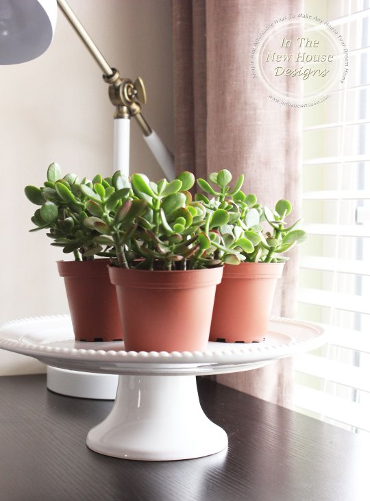 Display succulents on a cake stand for an instantly sophisticated grouping