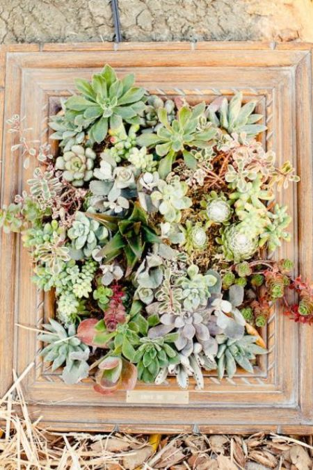 Wall Art can be made with succulents for an amazing living art piece