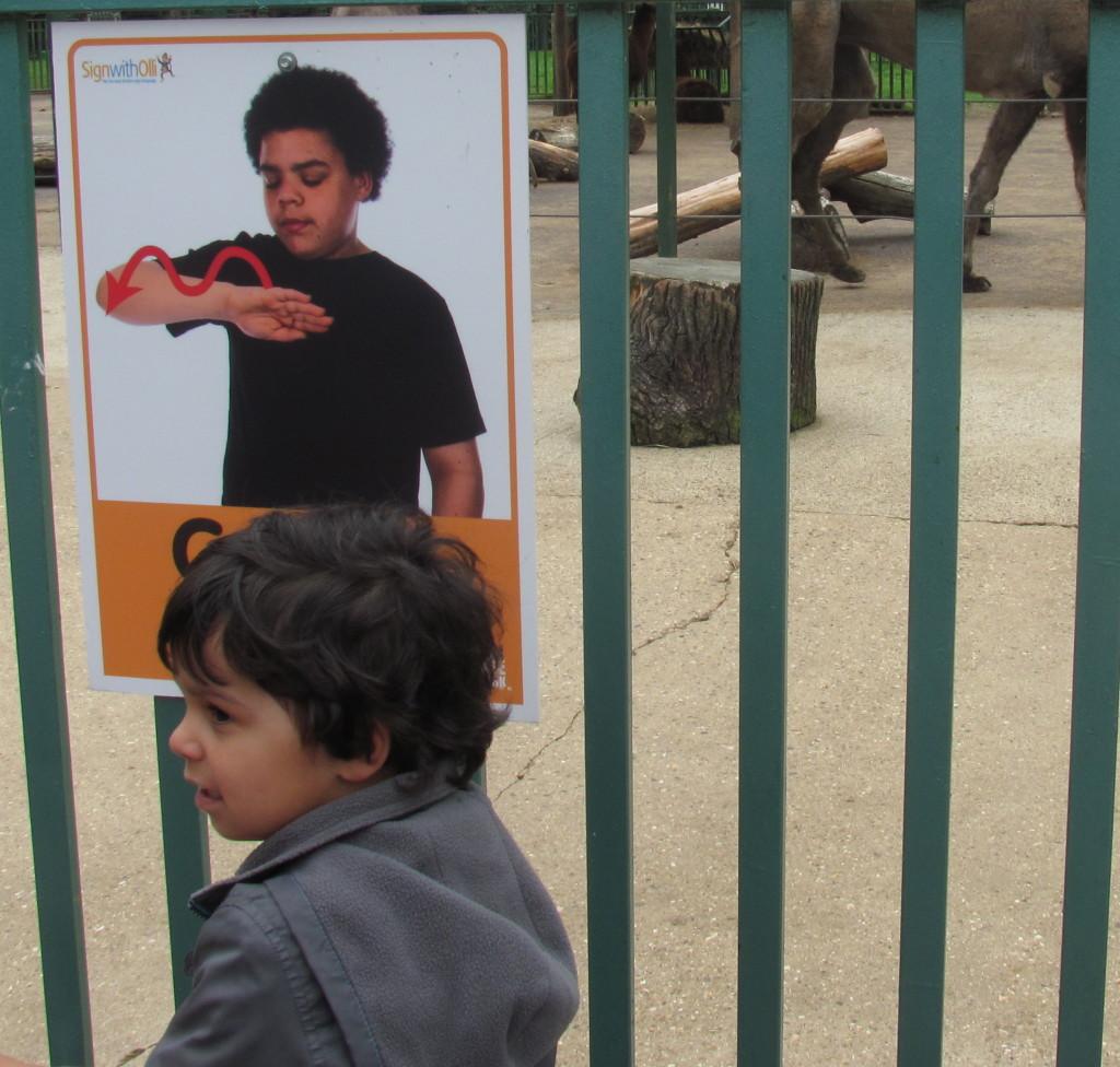 signing camel