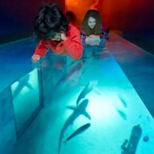 London Aquarium shark walk
