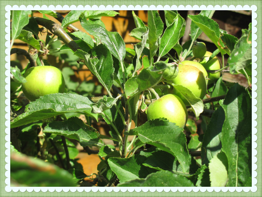 apple tree summer garden fun