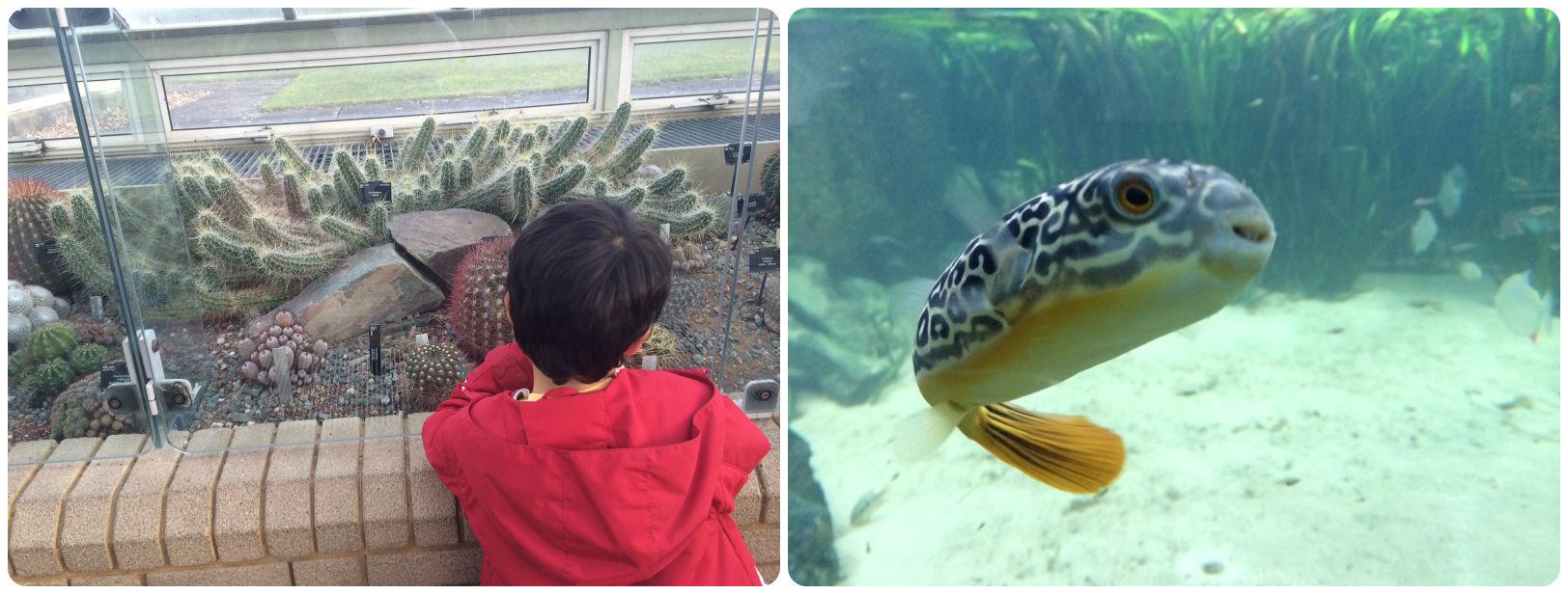 kew gardens aquarium