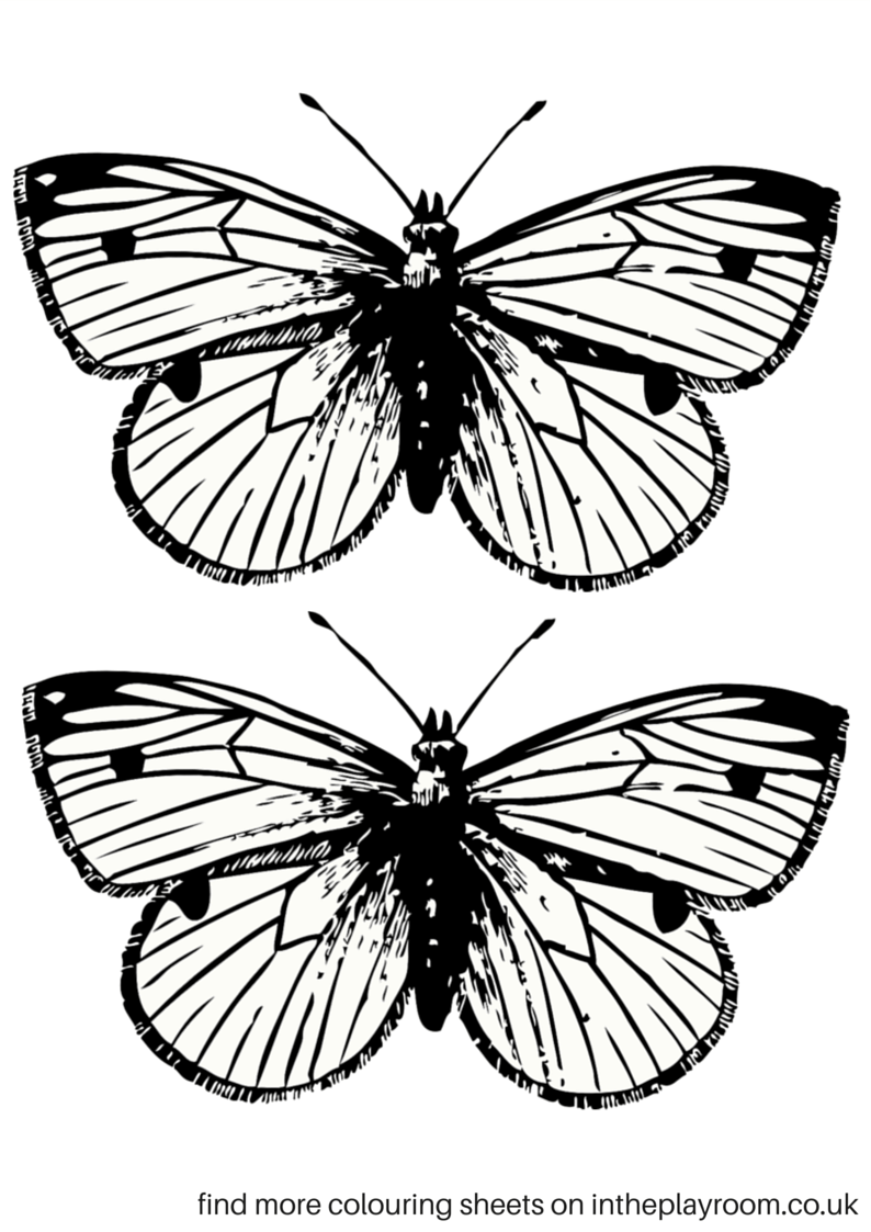 free butterfly coloring pages - photo#38