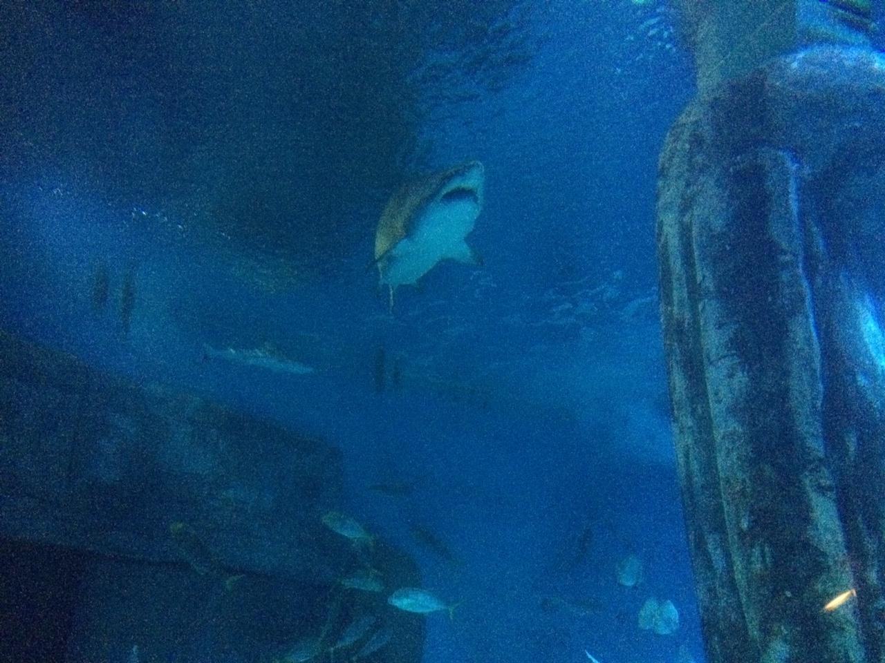 sharks at the london aquarium