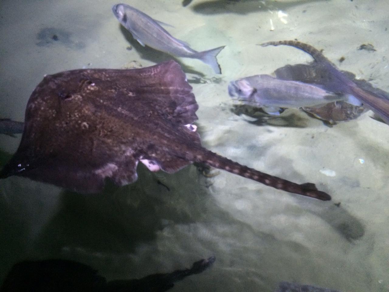 rays at the london aquariu