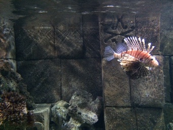 blue reef aquarium hastings