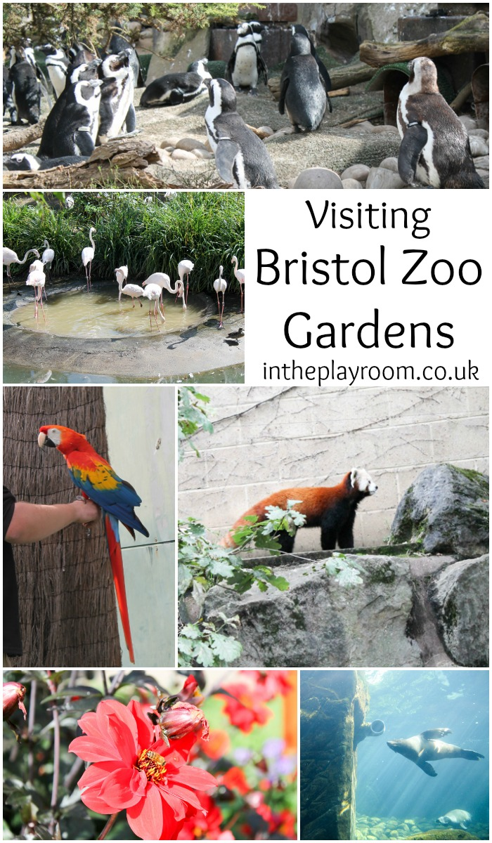 visiting bristol zoo gardens. A great place for a family day out in bristol