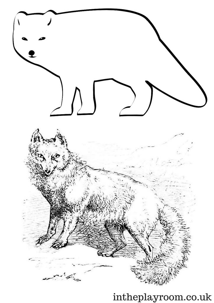 Arctic fox colouring page for kids, with two styles