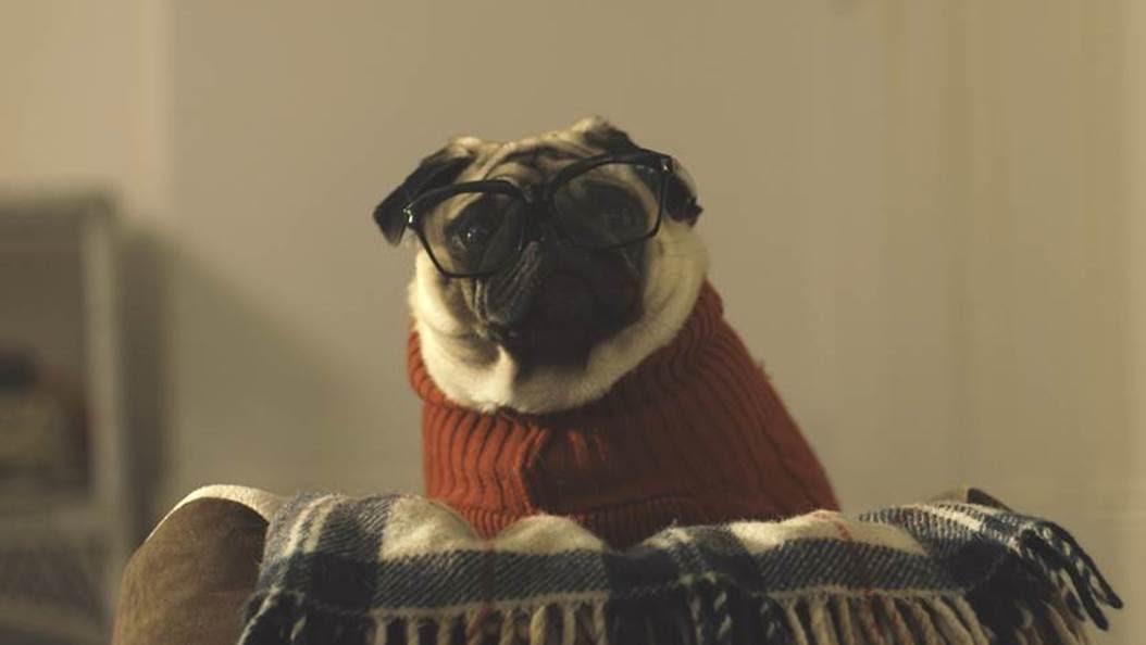 vision direct A Pug's Christmas
