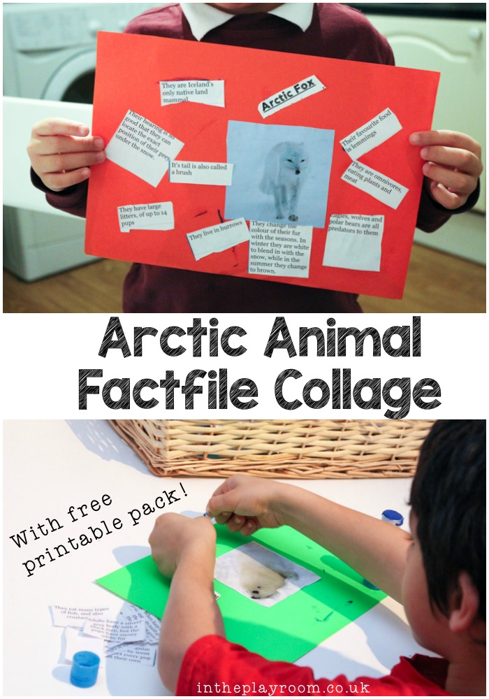 make polar animal factfile collages with these free printable fact sheets and image sheets