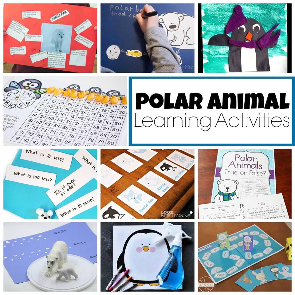 polar animal learning activities