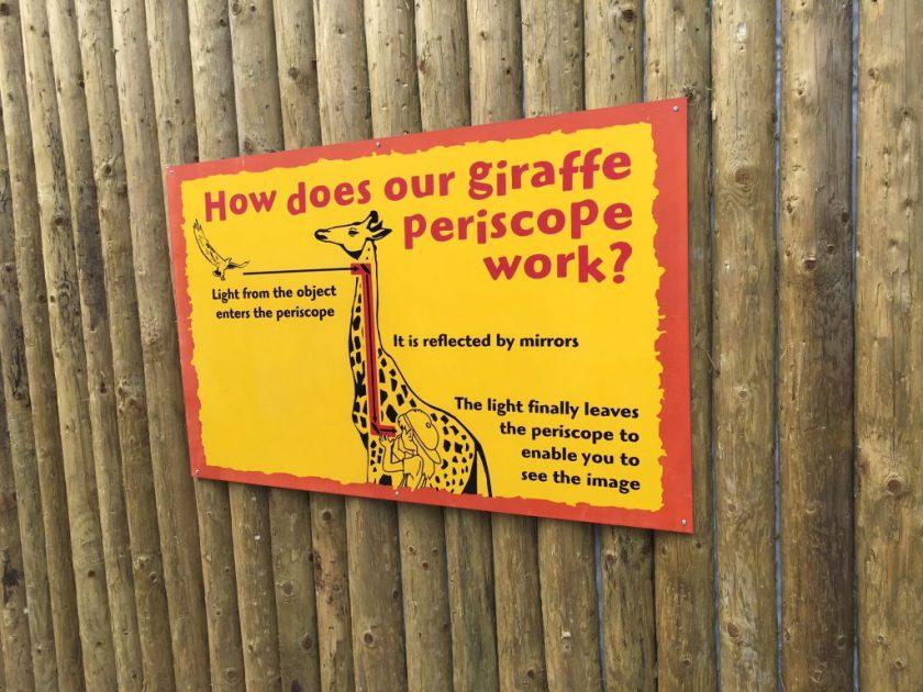 giraffe periscope at drusillas