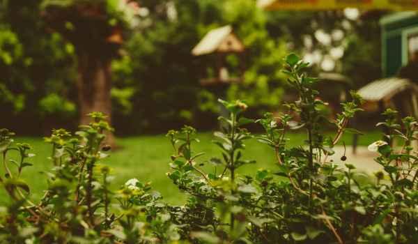 6 Fun Ways to Get Kids Involved in Gardening