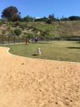 Large Dog Run