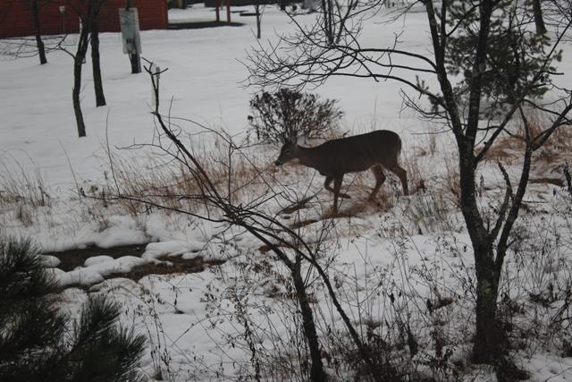 FN_Deer