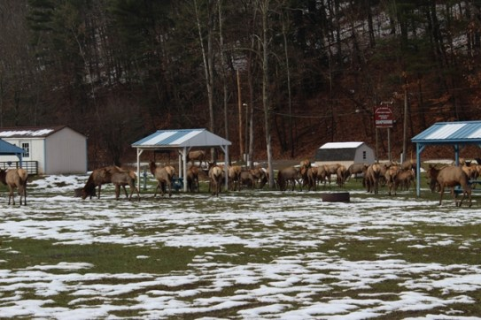 FN_Herd
