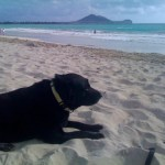 photo of lexi-dogg resting on the beach
