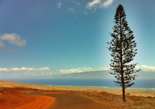 pine tree overlooking the sea from the island of Lanai