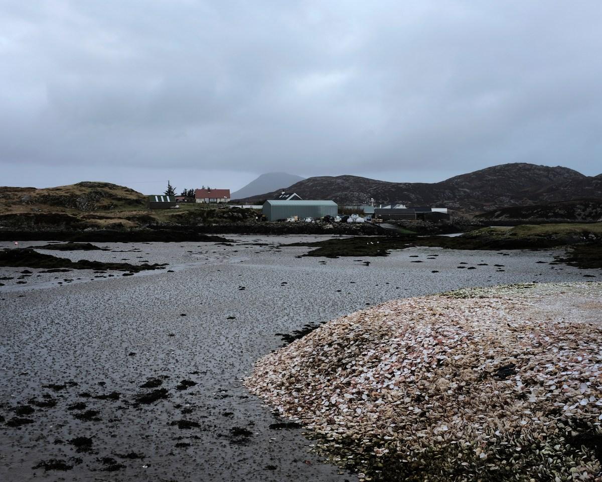 Shellfish beach2