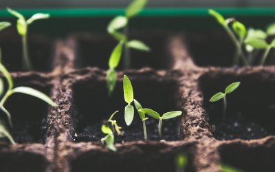 Are You Cultivating Good Relationship Soil?