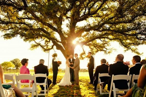 Big Tree, Small Wedding