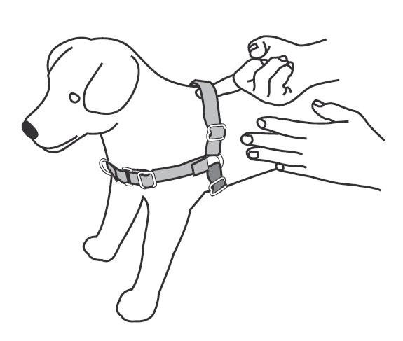 Support & Manuals: Easy Walk® Harnesses & Headcollars