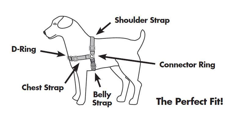 Easy Walk® Harnesses & Headcollars