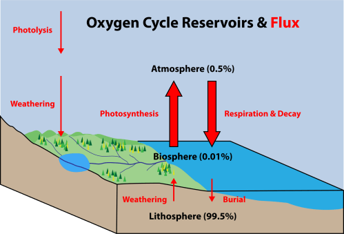 small resolution of figure 8 22 oxygen cycle