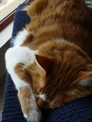 00qattericatsinksinsleep.jpg