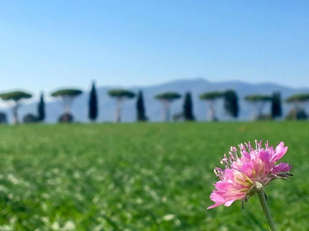 Fotos aus der Maremma - Toskana