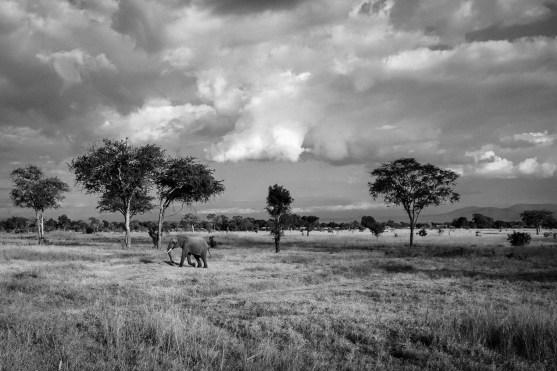 Einsamer Elephant