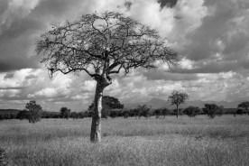 Ostafrikanisches Setting